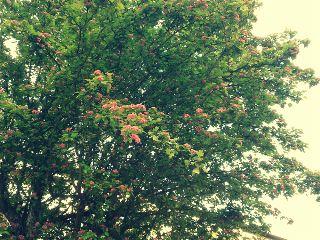 nature summer flower