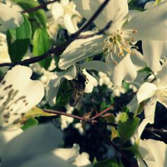 photography soleil spring flower white