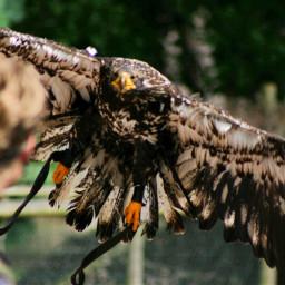 photography nature pets & animals flight emotions cute