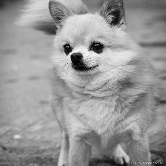 cute pets & animals