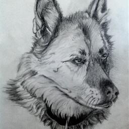 i love draw drawn drawing pencil bestdrawing art artist dog animal drawdog dogs animal_dog