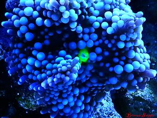 nature photography pets & animals colorful macro coral