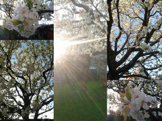 summer nature collage flower spring