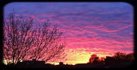 sun sky tree cute nature
