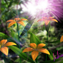 nature flower beautiful color splash