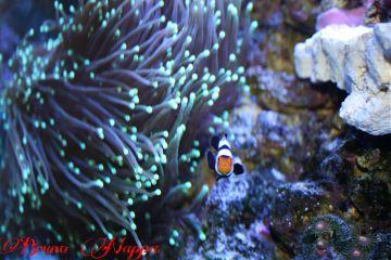 nature pets & animals photography macro fish