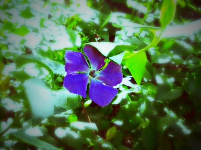 photography spring nature flower colorful cute